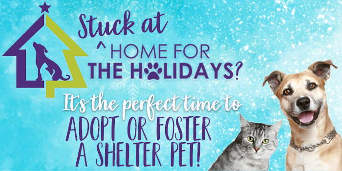 Adopt a Pet for the Holidays