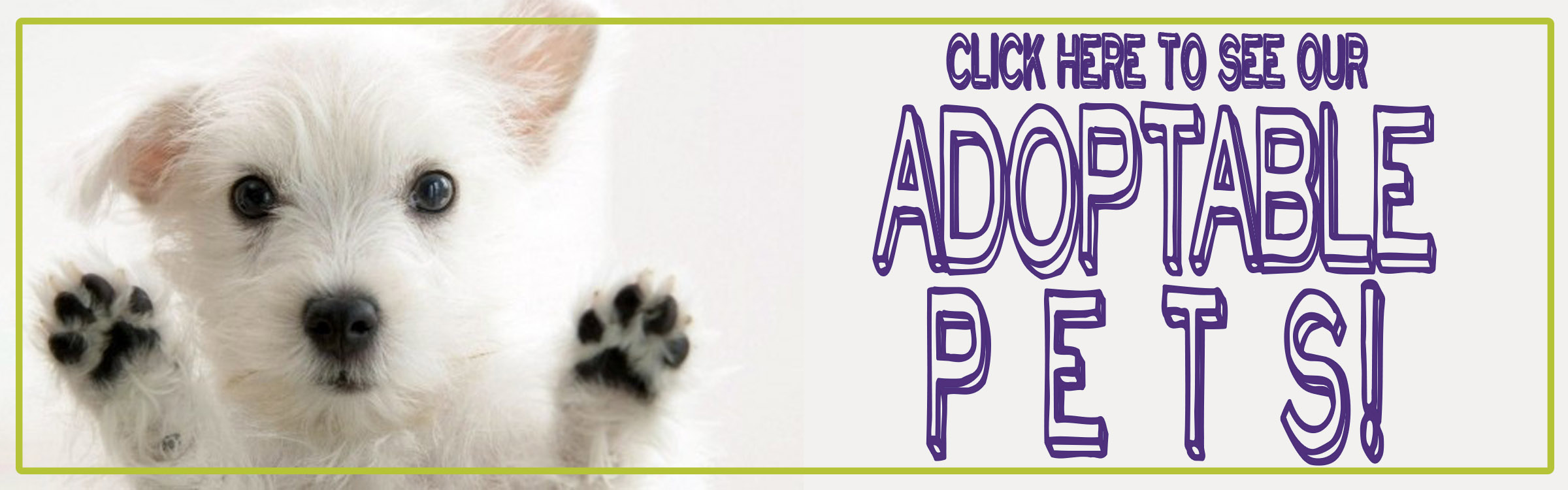Top Ten Cute Pet Adoption Sites