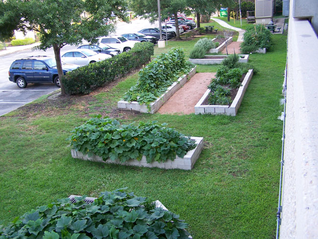 Hdhhs Central Administration Community Garden